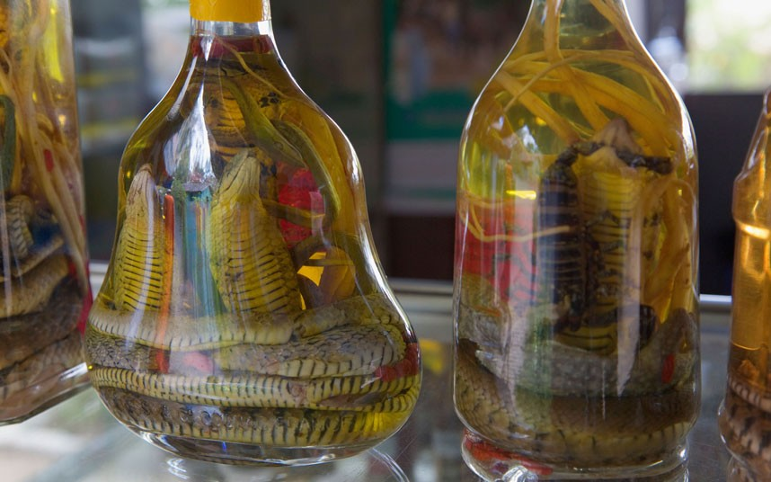 snake wine asia