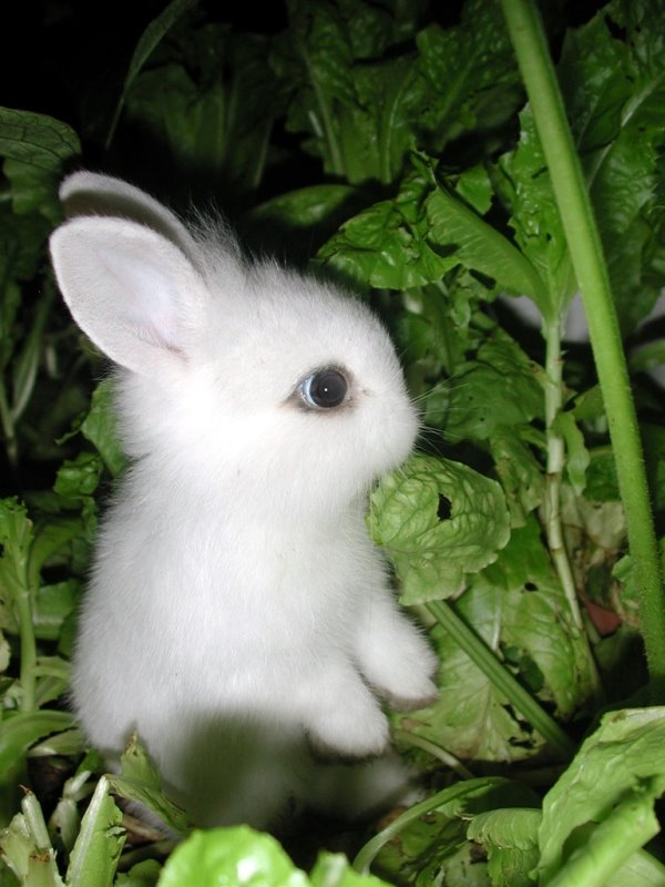 cutest bunny rabbit in the world