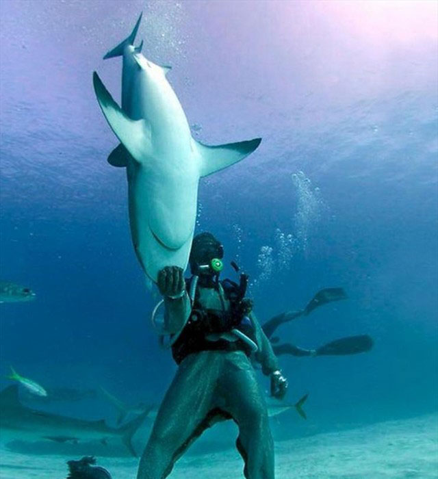 scuba diver holds shark
