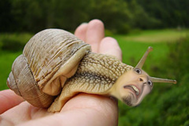 snail with a face