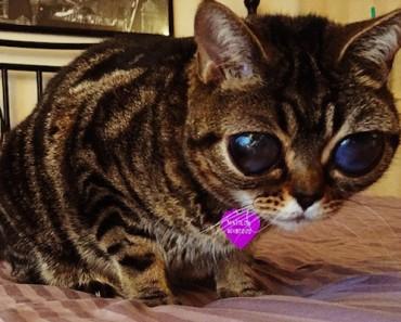 matilda-the-alien-cat-featured