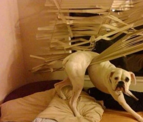 guiltydog1