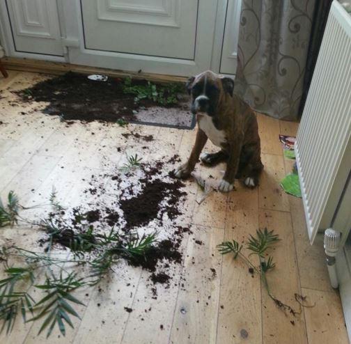 guiltydog12