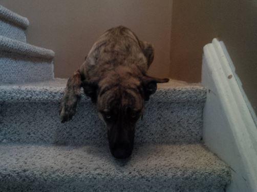 guiltydog13