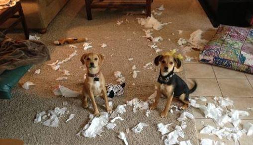 guiltydog2