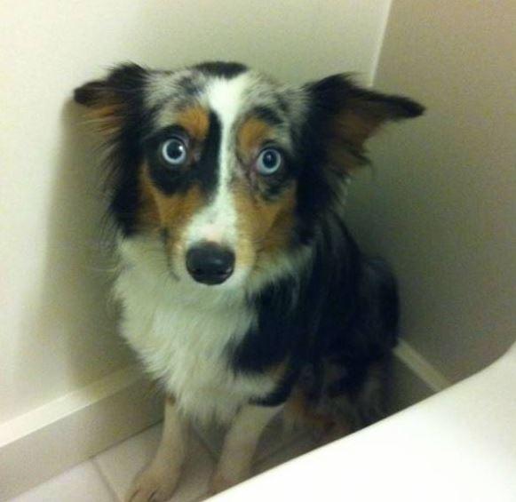 guiltydog3