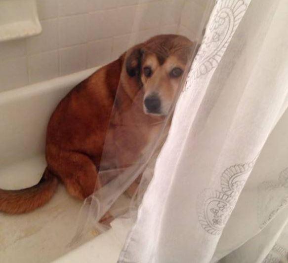 guiltydog8