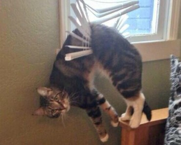 15 Cats That Should Know Better Especially Number 8